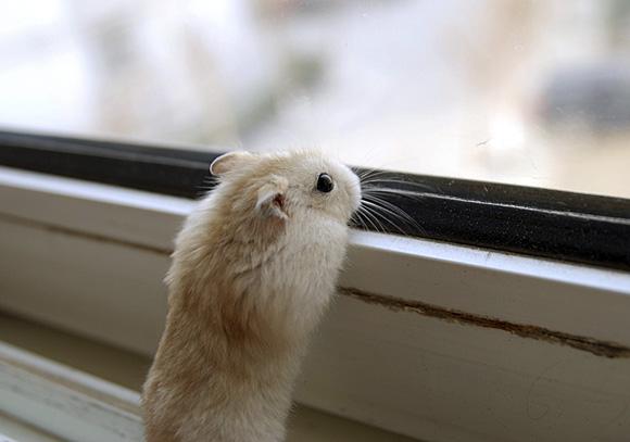 Curiosity-l
